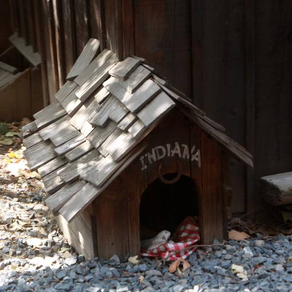Indiana Dog House - 1